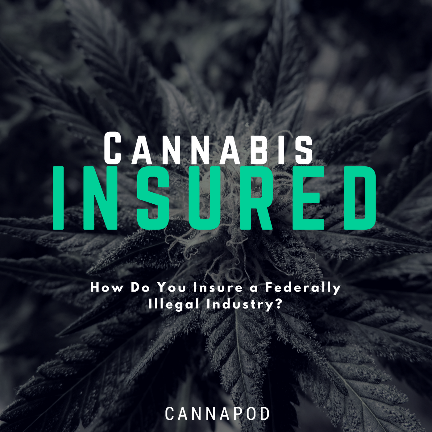 cannabis business insurance and cannabis grow insurance